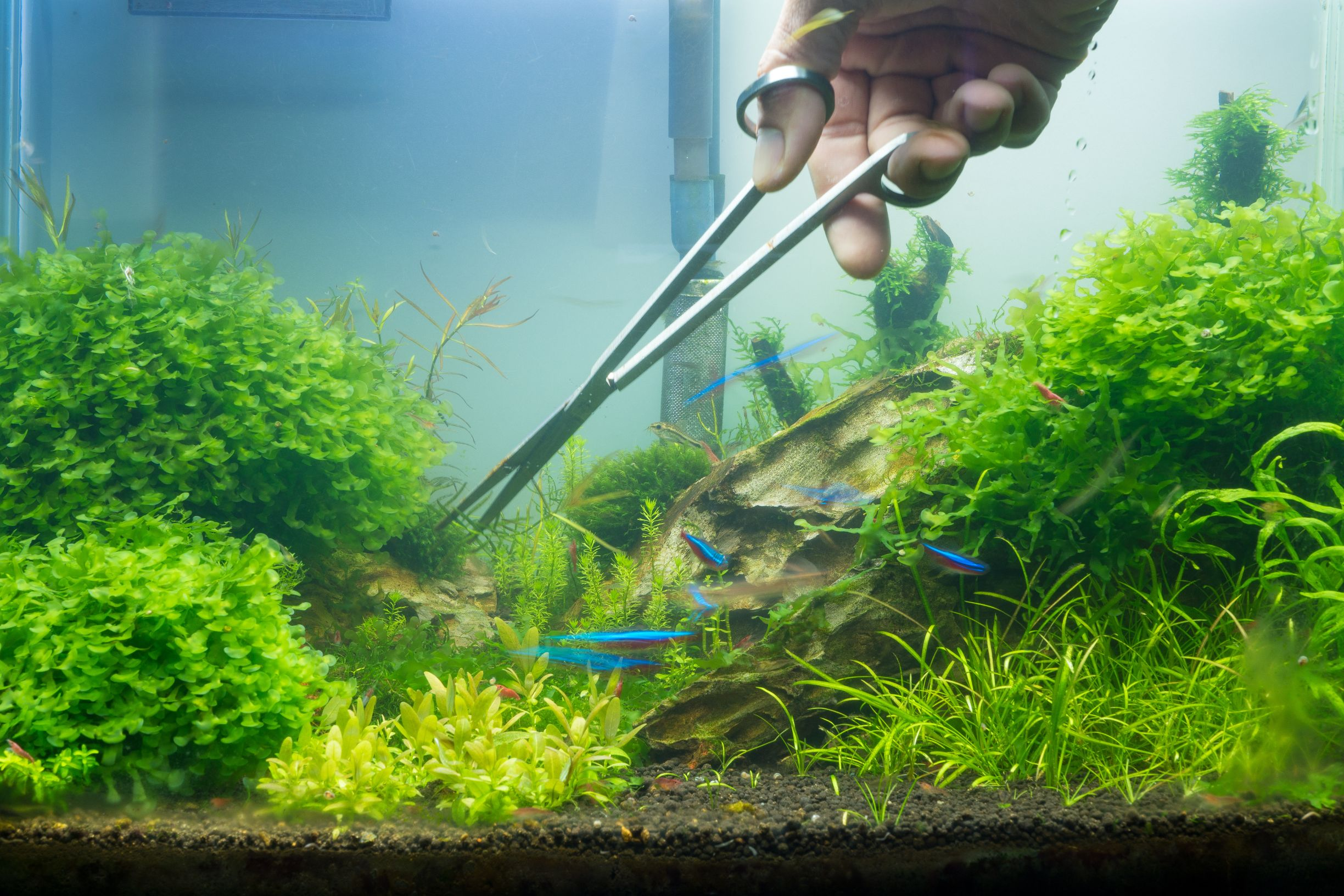Aquariums - Lease & Maintenance