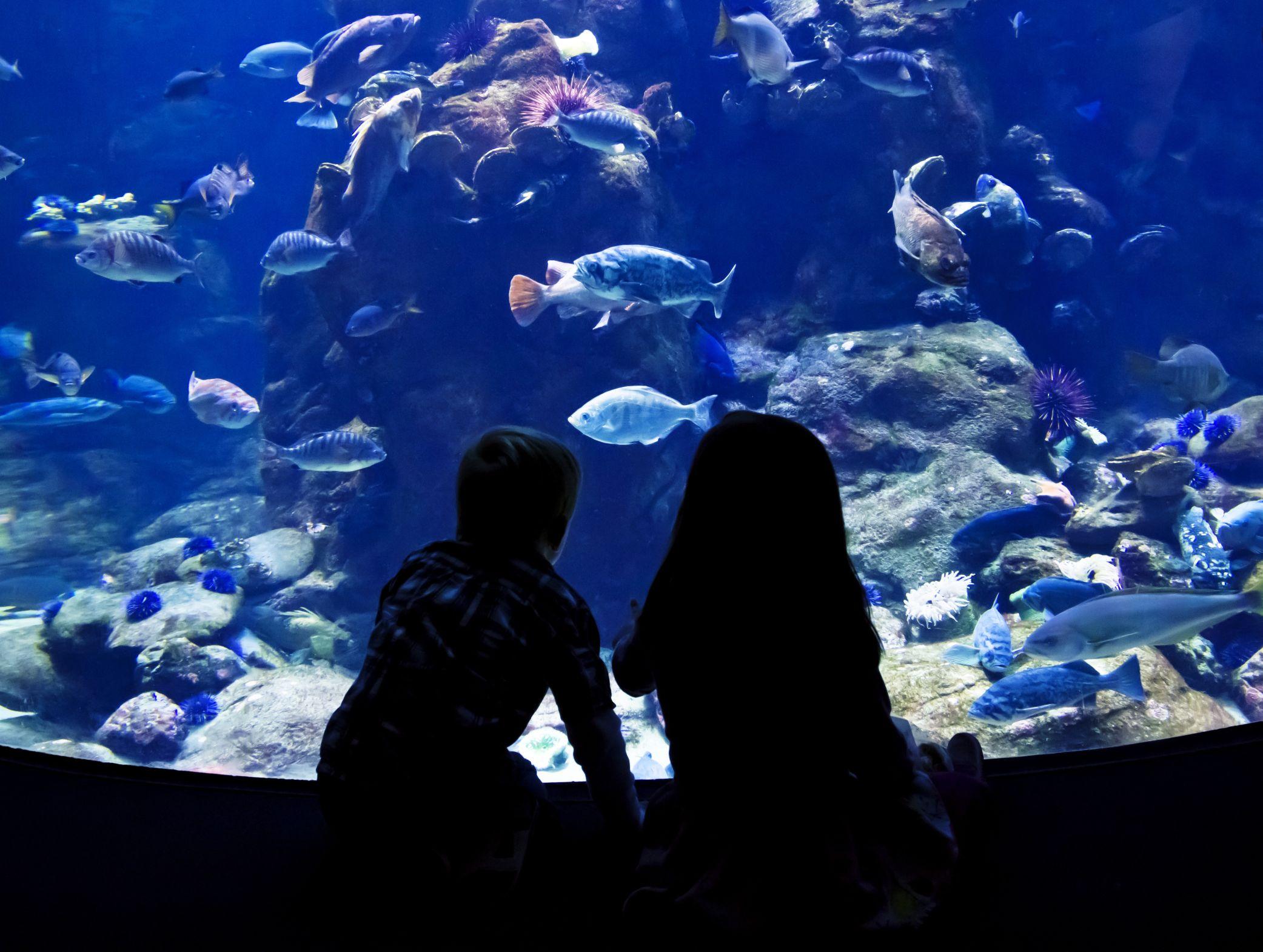 Aquariums - Public