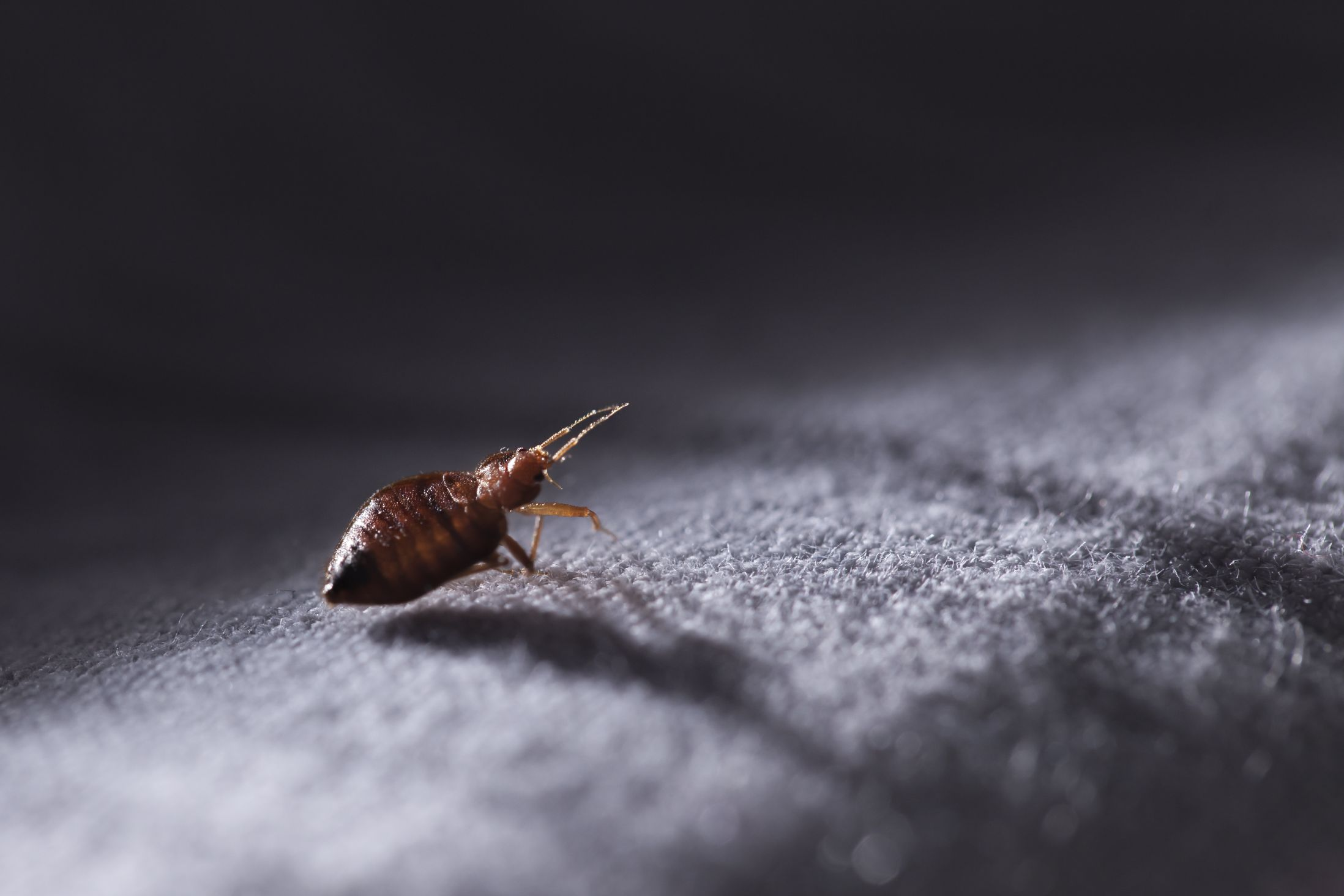 Bed Bug Inspection Service
