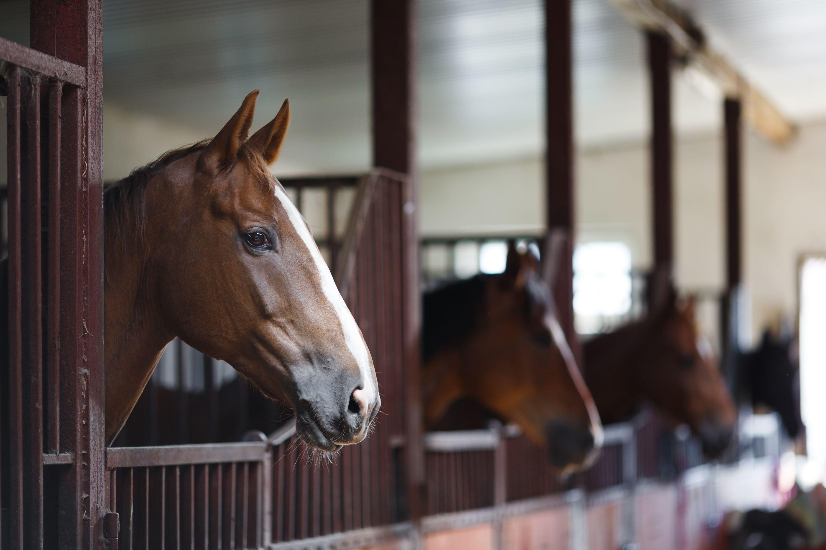 Boarding - Horses