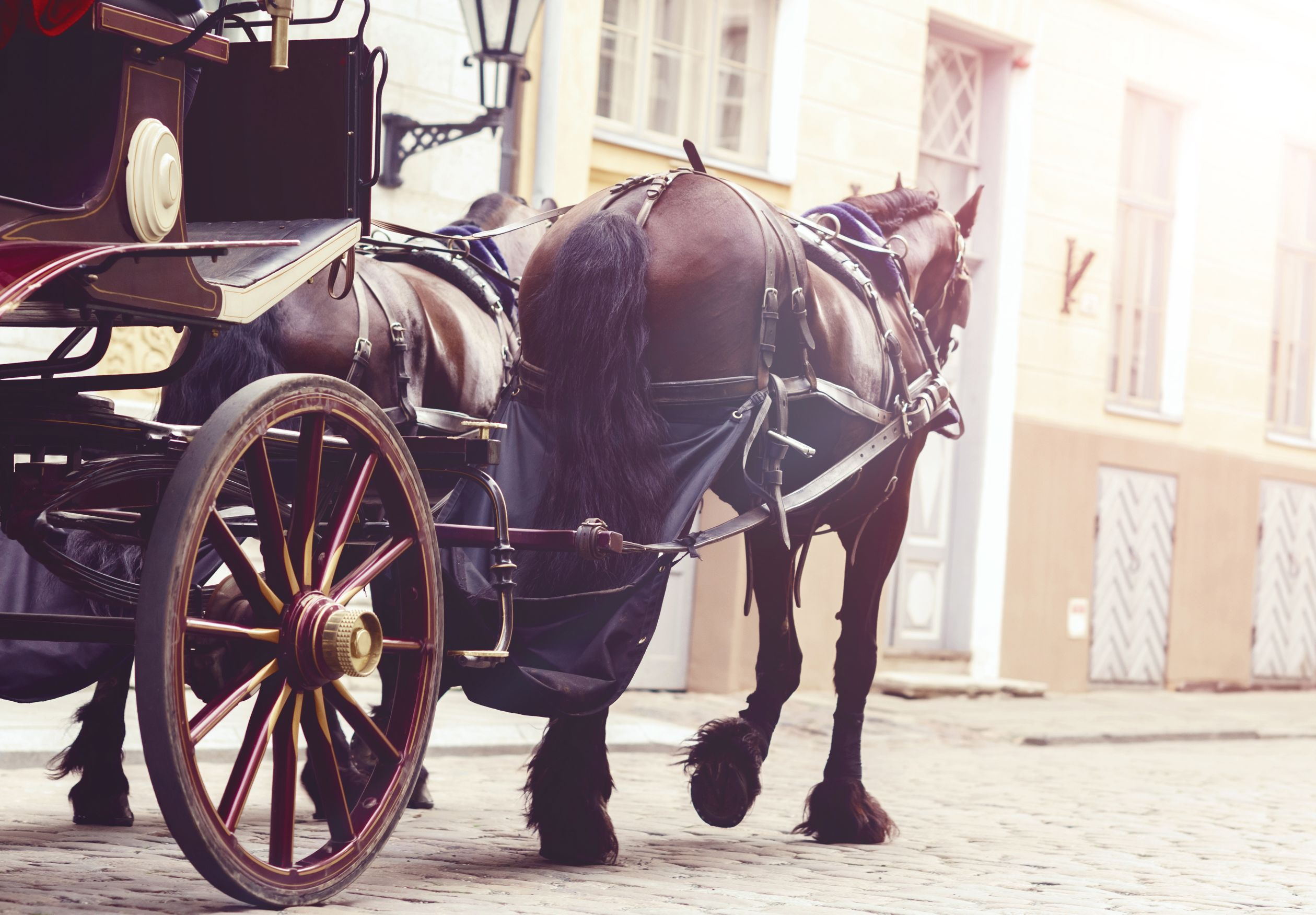 Carriages - Horse
