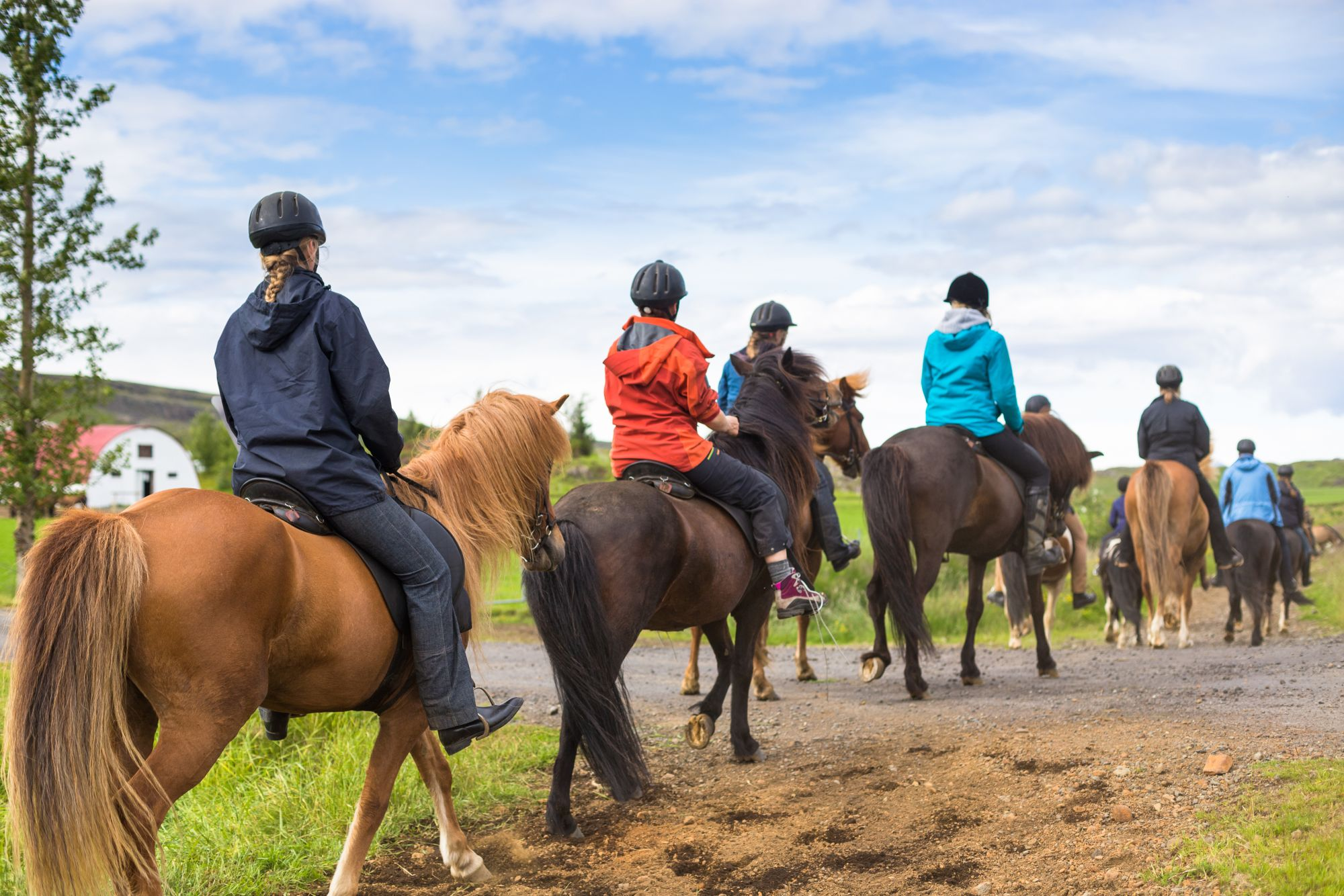 Horse Riding/Horse Trail Rides