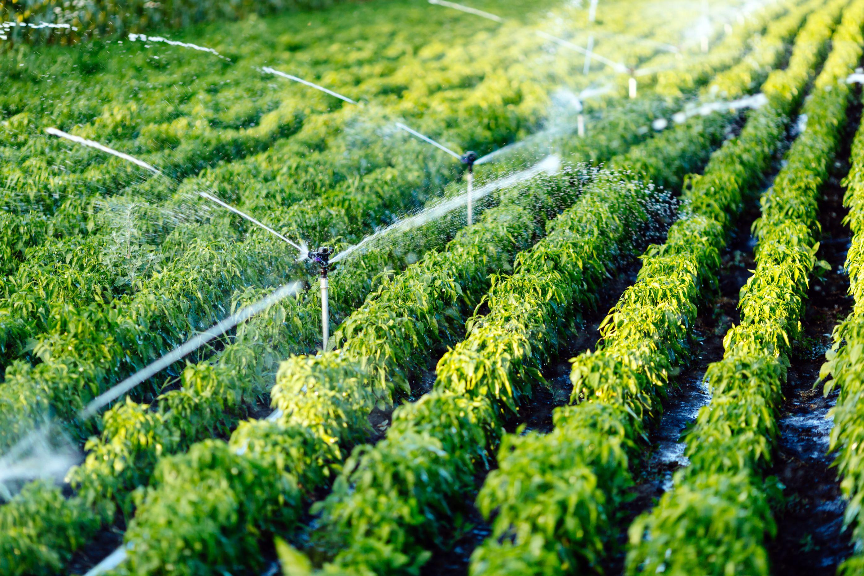 Irrigation Consultants