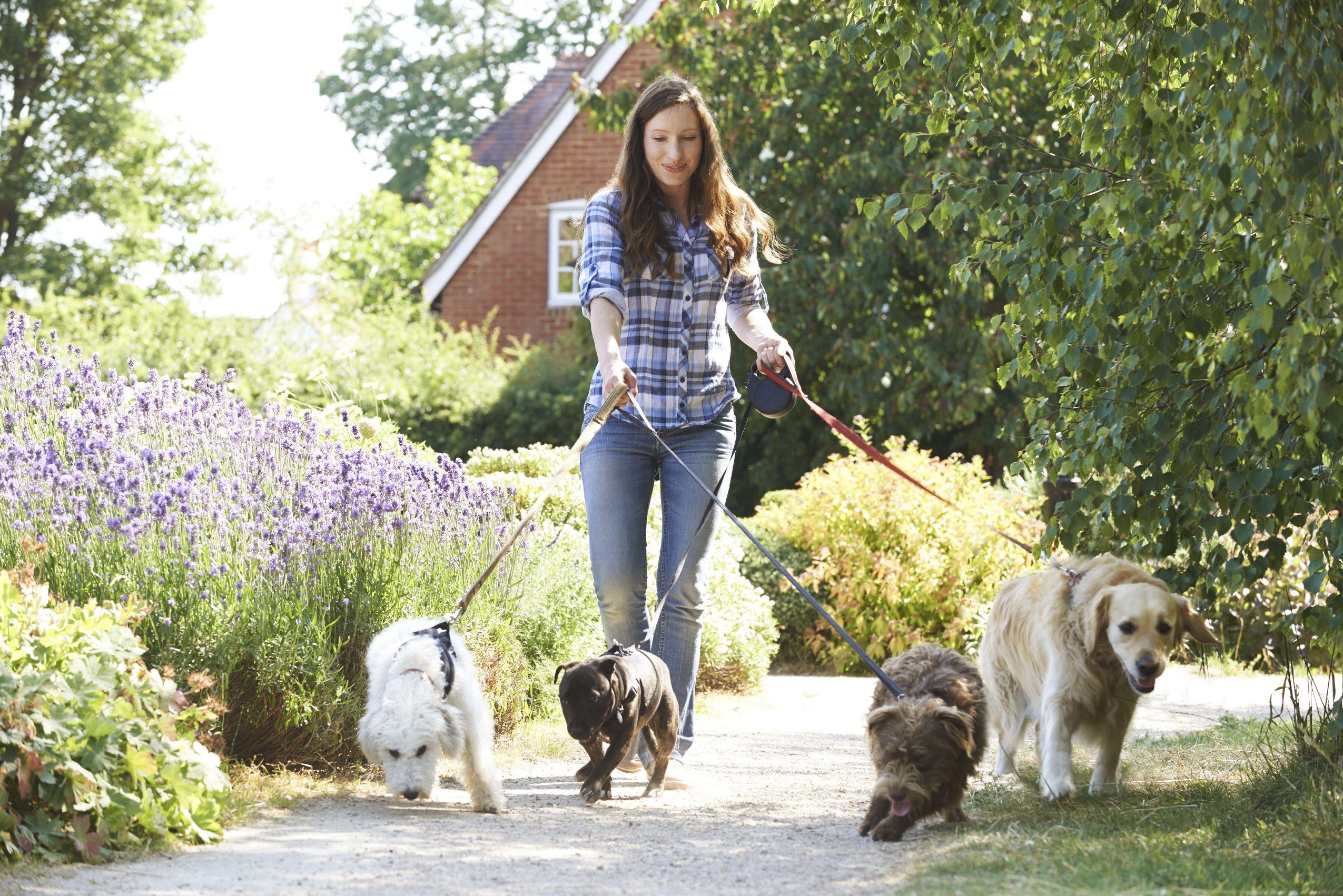 Pet Exercising Service