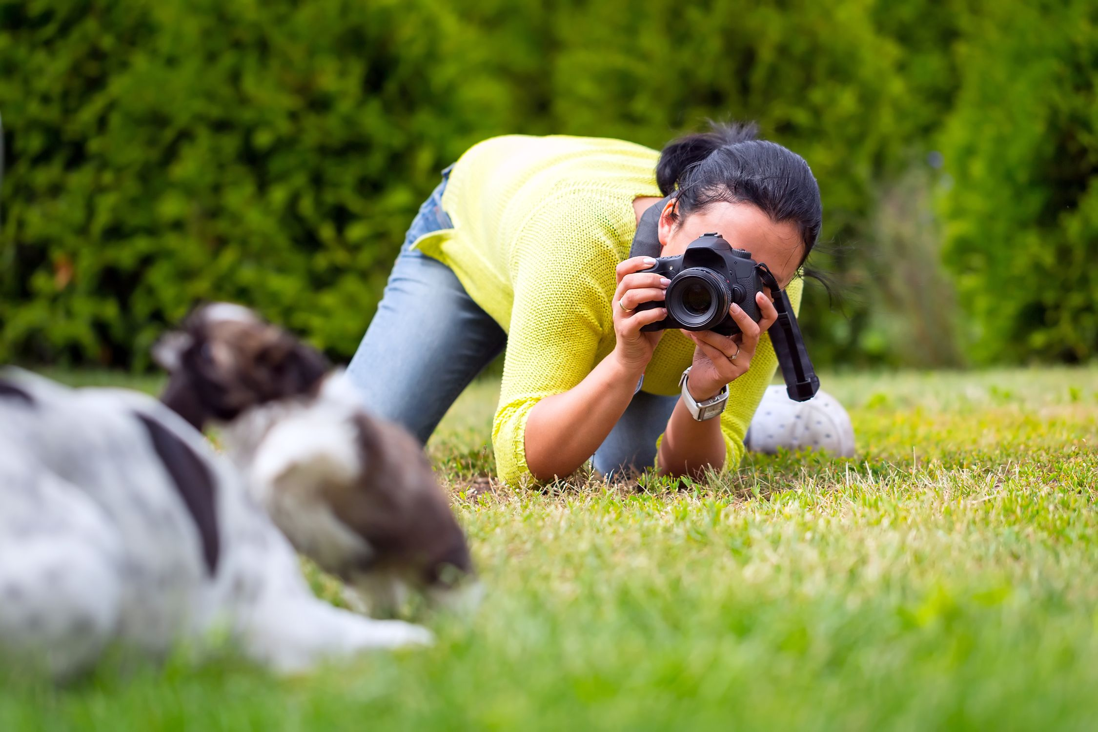 Photographers - Pet