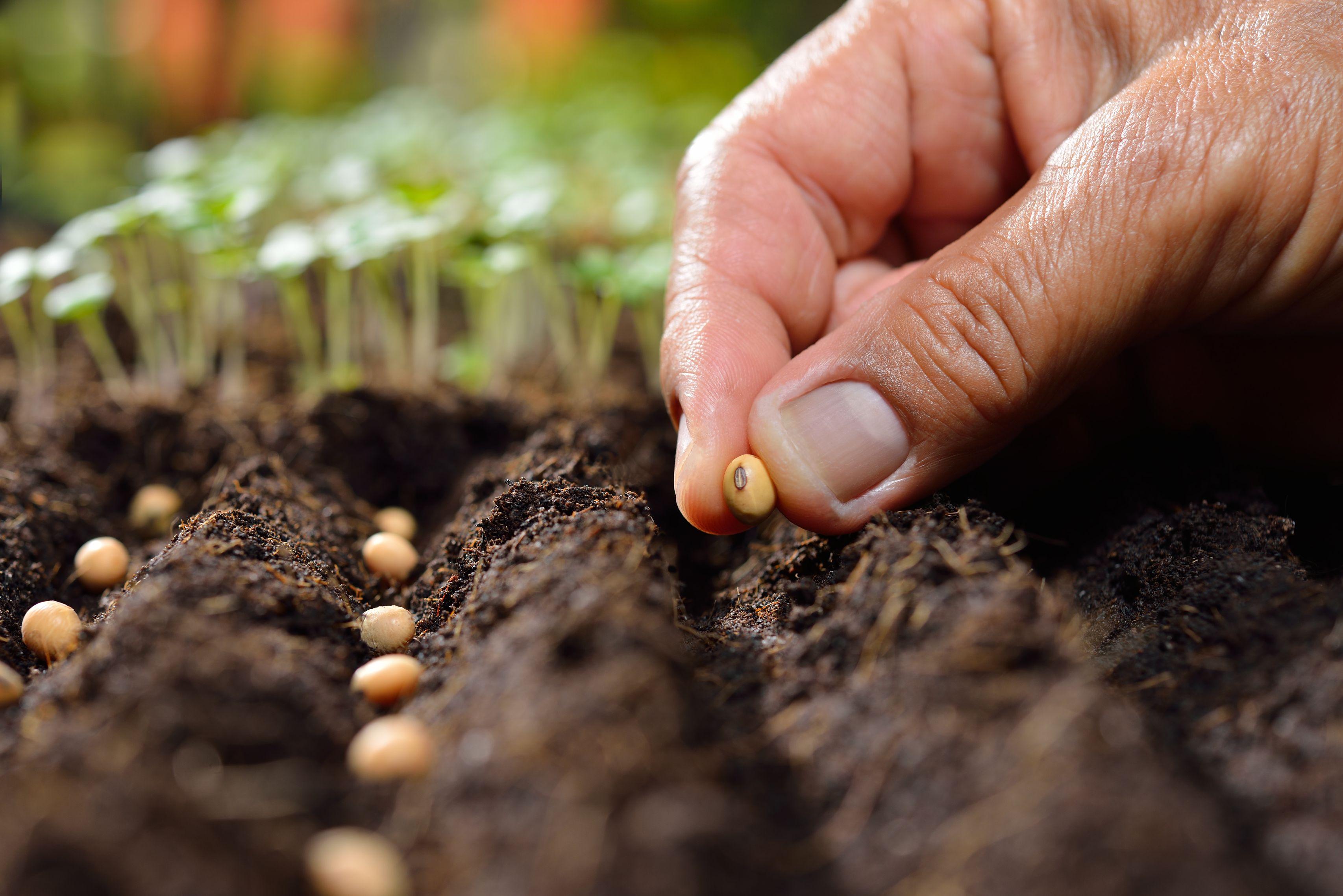 Seeding