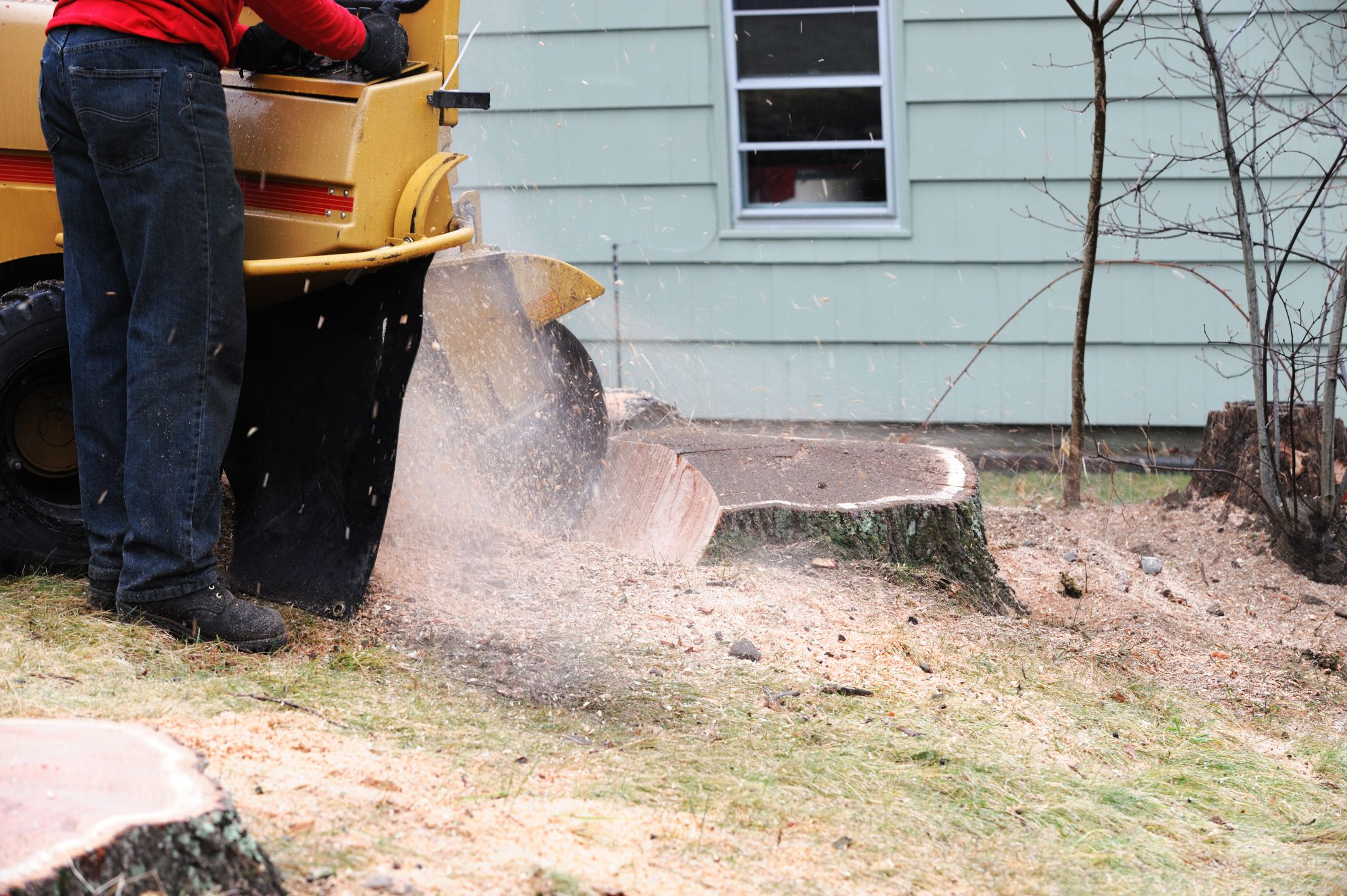 Stump Removal & Grinding