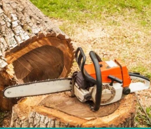 best-tree-service-largo-fl-usa