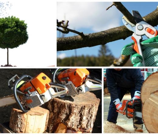 best-tree-service-murfreesboro-tn-usa