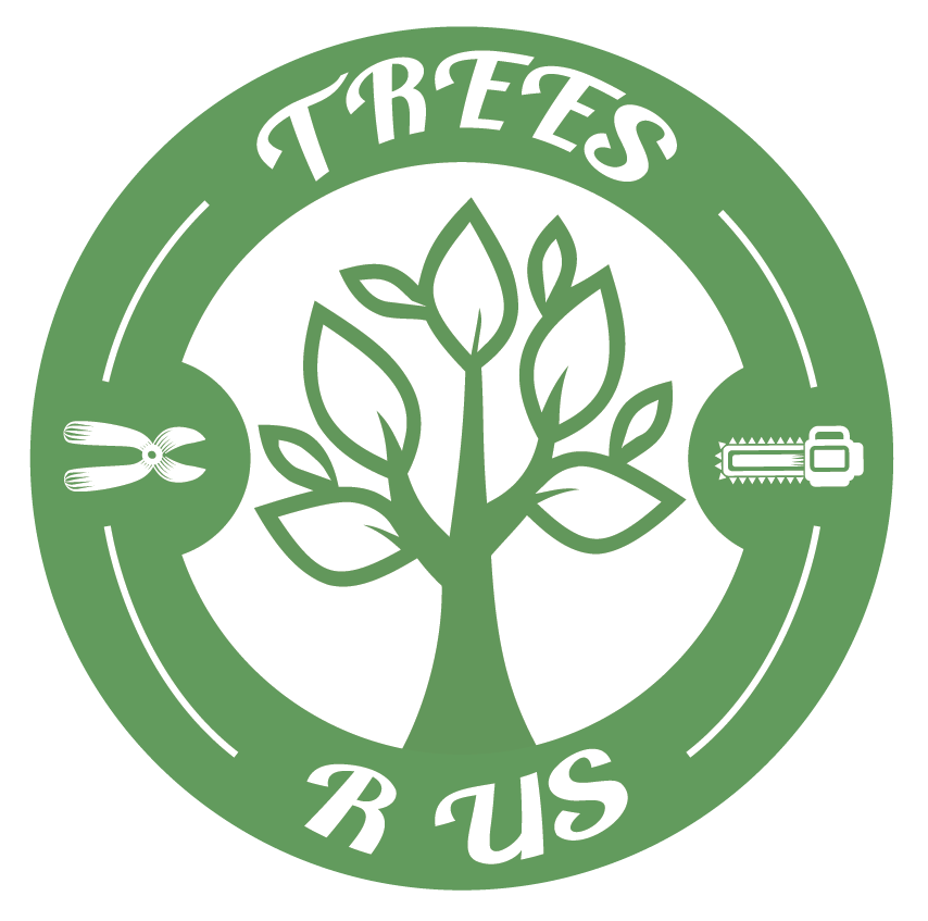 best-tree-service-tucson-az-usa