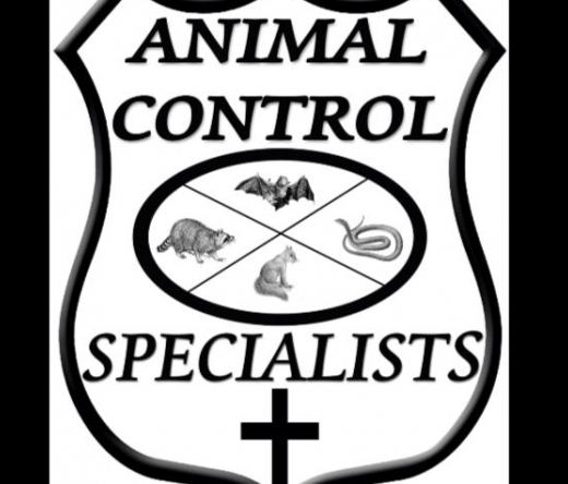 best-pest-control-akron-oh-usa