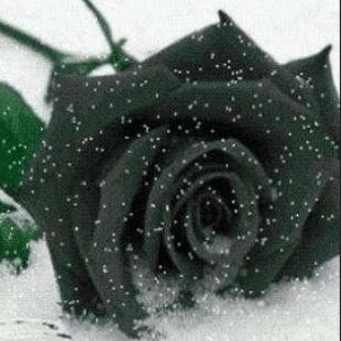 dark-black-flowers