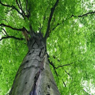 d-d-tree-service-inc