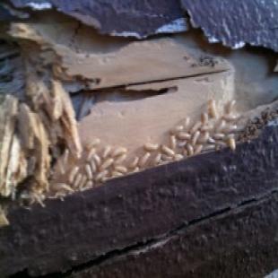 best-termite-control-riverside-ca-usa