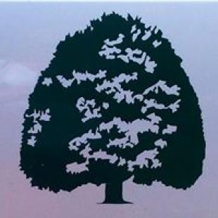 tree-world-tree-experts