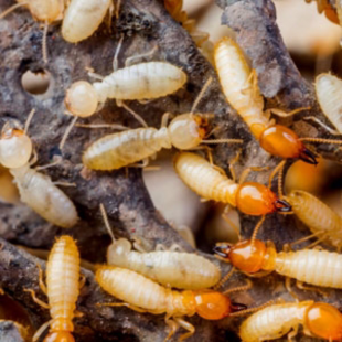 best-termite-control-stockton-ca-usa