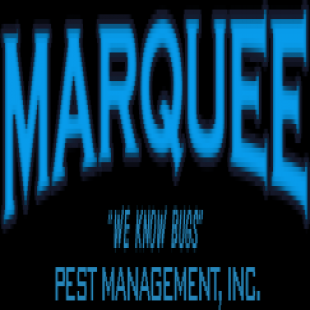 best-termite-control-fremont-ca-usa