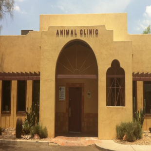 best-animal-hospitals-tucson-az-usa