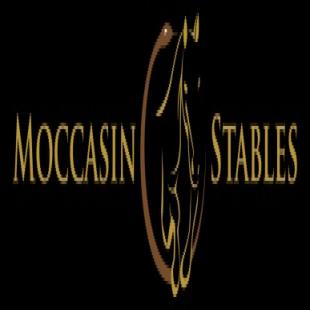 best-horse-training-tallahassee-fl-usa