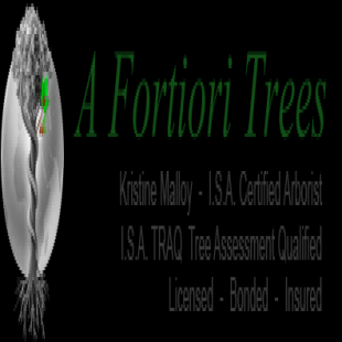 a-fortiori-trees
