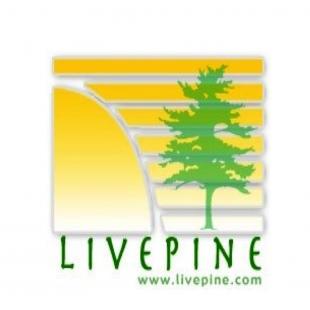 live-pine