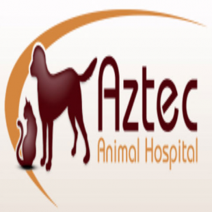 best-veterinarians-scottsdale-az-usa