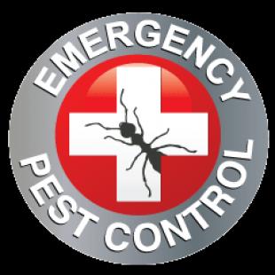 emergency-pest-control