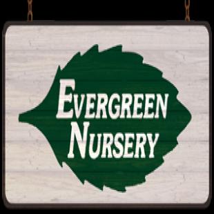 evergreen-nursery