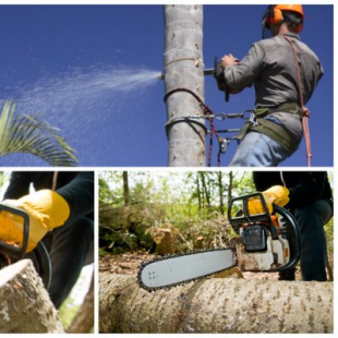 best-lawn-tree-care-corpus-christi-tx-usa