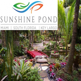 sunshine-pond