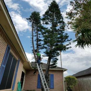 best-tree-service-corpus-christi-tx-usa