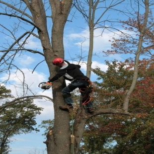 alans-tree-service-indian