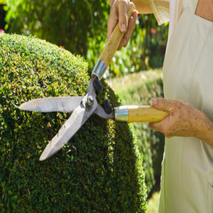 best-lawn-tree-care-jacksonville-fl-usa