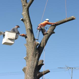 best-tree-service-san-jose-ca-usa
