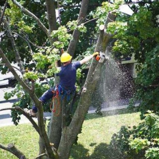 chesapeake-tree-service