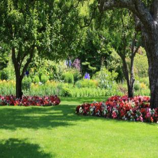 best-lawn-tree-care-san-jose-ca-usa