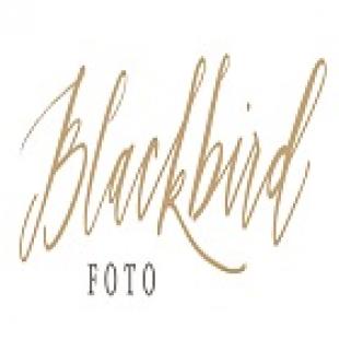 blackbird-foto