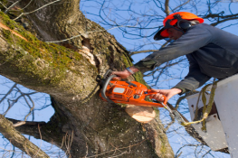 Nashville-Tennessee-Tree-Service