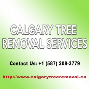 best-tree-service-calgary-ab-canada