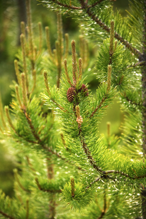 j-rojas-tree-services