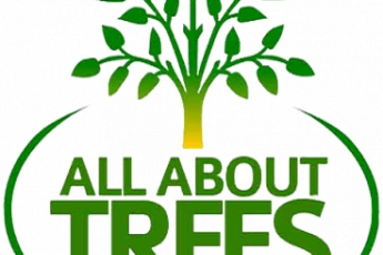 best-tree-service-gilbert-az-usa