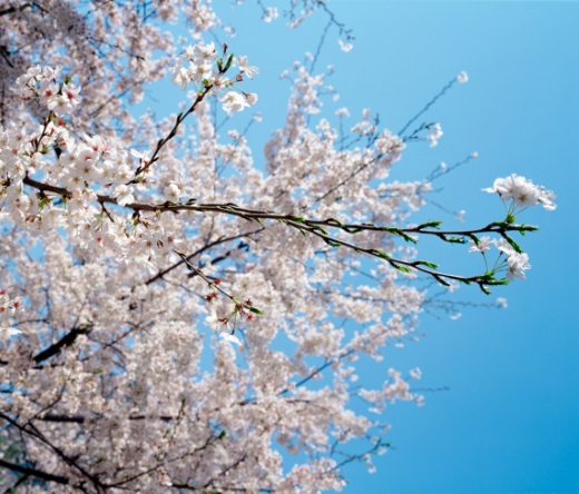 best-tree-service-memphis-tn-usa