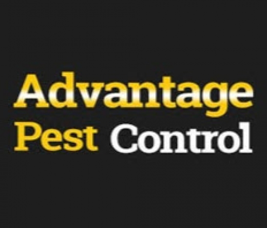 advantagepestcontroltermite-1