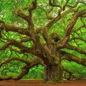 best-tree-service-birmingham-al-usa