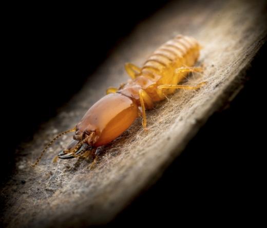best-termite-control-fort-worth-tx-usa