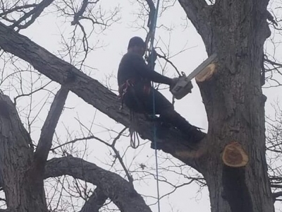 best-tree-service-owensboro-ky-usa