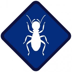 affordable-termite-control-fullerton