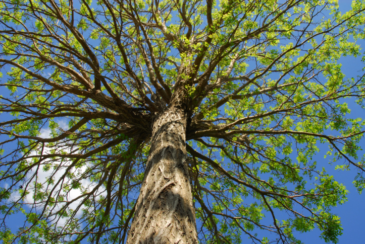 ccs-landscaping-and-tree-service