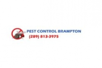 best-pest-control-brampton-on-canada